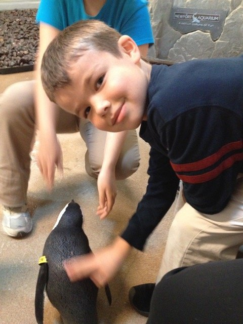 Thomas gets to touch a penguin during our Newport Aquarium great penguin encounter